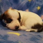 View 2015-10 S&A Puppy 5
