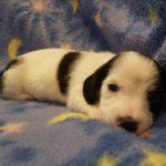 View 2015-10 A&A Puppy 4