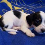 View 2015-10 A&A Puppy 2