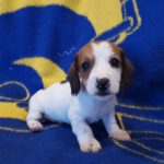 View 2015-10 A&A Puppy 1