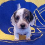 View 2015-10 S&A Puppy 1