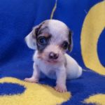 View 2015-10 S&A Puppy 2