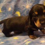 View 2016 N&A Puppy 6