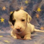 View 2016 N&A Puppy 5